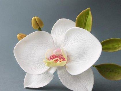 Как сделать Орхидею из мастики своими руками